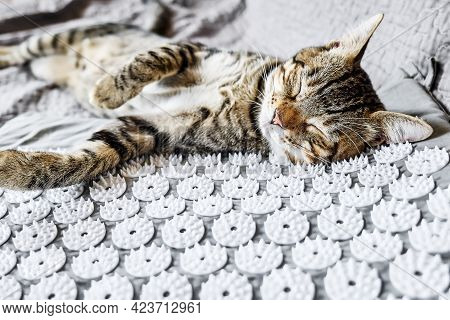 Funny Tabby Cat Lying On Acupressure, Acupuncture Mat On The Bed. Alternative Medicine And Home Mass