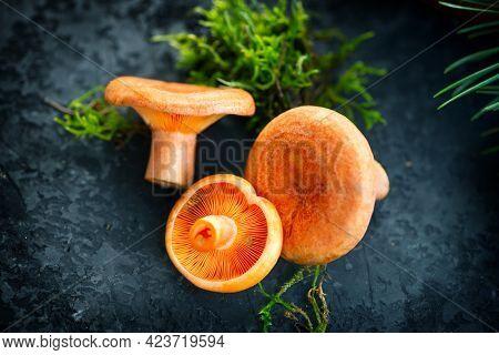Raw wild Saffron milk cap mushrooms on dark old rustic background. Lactarius deliciosus, Rovellons, Niscalos mushroom closeup. Organic Fresh ceps. Soft focus, top view