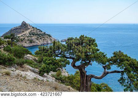 Tree Growing Near Edge Of Steep Rock. Mountains & Sea Are On Background. Shot In Novyi Svit, Crimea.