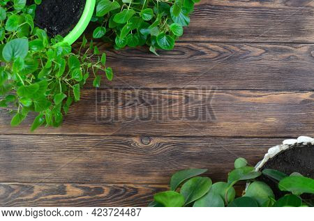 Flat Lay Top View With Copy Text Space With Indoor Green Botanical Plants, Sustainable Summer And Ho