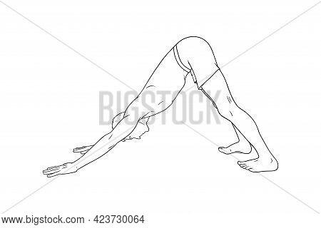 Yoga Downward Facing Dog Pose Or Svanasana. Man Practicing Yoga. Sketch Vector Illustration Isolated