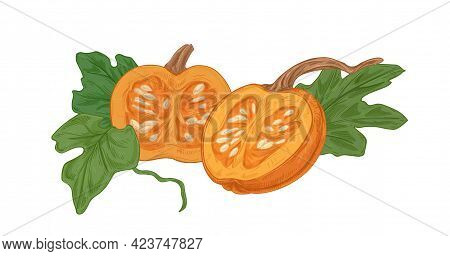 Cut Halves Of Ripe Fall Pumpkin With Orange Flesh And Seeds. Round Squash With Leaves Composition. R