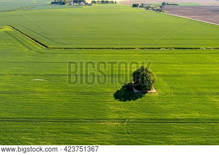View From Above On Lonely Tree With Shadow In A Green Agricultural Field