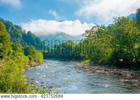 River In The Valley On A Misty Morning. Wonderful Summer Landscape In Mountains. Trees Along The Sho