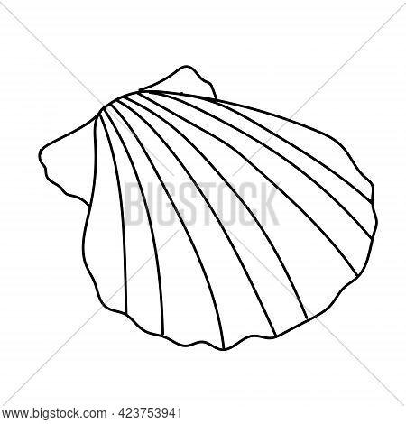Seashell Vector Illustration Isolated On White Background