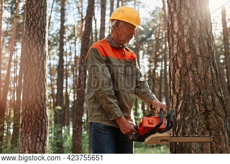 Lumberman In Protective Workwear And Yellow Helmet Sawing Tree With Chainsaw In Forest. Professional