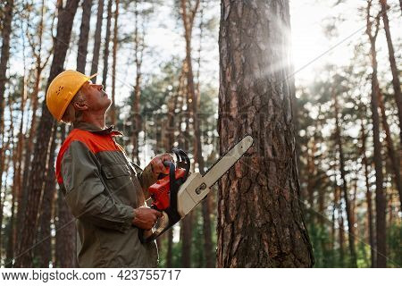Side View Of Woodsman With Chainsaw In Hands Looking At Tree For Cutting, Wearing Yellow Protective