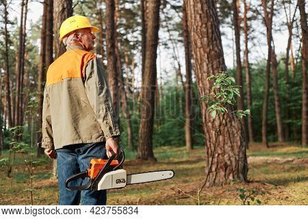 Back View Of Logger Wearing Protective Helmet And Uniform Holding Chainsaw In Hands, Looking Around