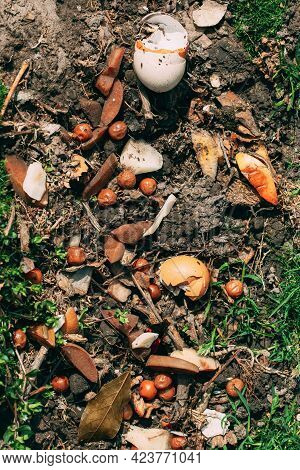 Background Of Compost From Spilled Food Waste On Ground, Humus, Manure. Rotting Kitchen Scraps With