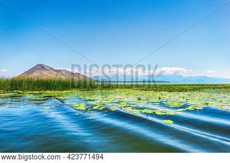 Lilies In The Waters Of Skadar Lake, Montenegro