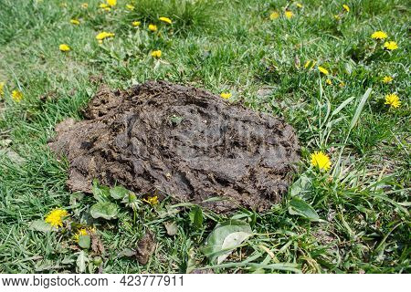 Large Pile Of Cow Feces On Gree Grass. Closeup Outdoor On Sunny Day