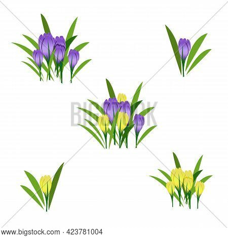 Yellow And Purple Crocuses Set. The First Spring Flowers Bloom From The Snow. Beautiful Spring Eleme