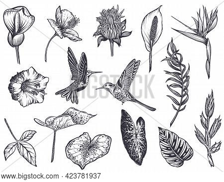 Vector Collection Of Tropical Flowers, Hummingbird, Jungle Palm, Exotic Leaves.