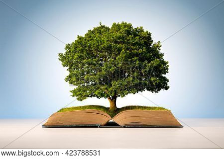 Book or tree of knowledge concept with an oak tree growing from an old open book