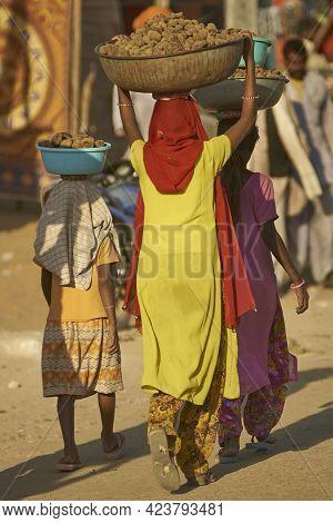 Pushkar, Rajasthan, India - November 4, 2008: Group Of Females Carrying Baskets Containing Camel Dun