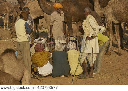 Pushkar, Rajasthan, India - November 5, 2008: Group Of Camel Herders At The Annual Pushkar Fair In R