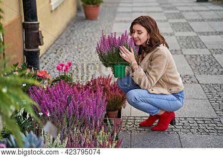 Young Beautiful Woman Sitting In Squats Holding A Flower Pot With Blooming Violet Heather Plant In A