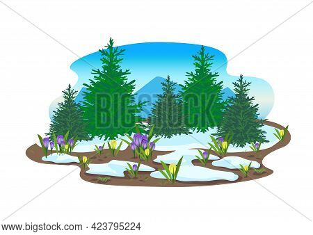Spring Landscape With Forest, Glade, Melting Snow, Yellow And Gray Crocuses. Beautiful Spring Backgr