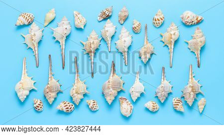 Banner With Different Kinds Of Seashells And Sea Snails ( Murex Trapa And Nutmeg) Top View At The Bl