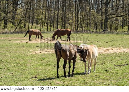 Portrait Of A Horses On A Pasture In Nature