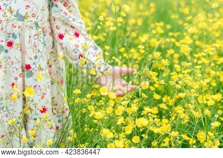 Baby Girl Touching Yellow Flower, Close-up Of Hand And Blooming Meadow