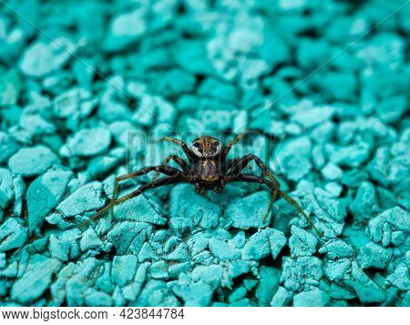 Close-up Spider Crawling On A Turquoise Surface