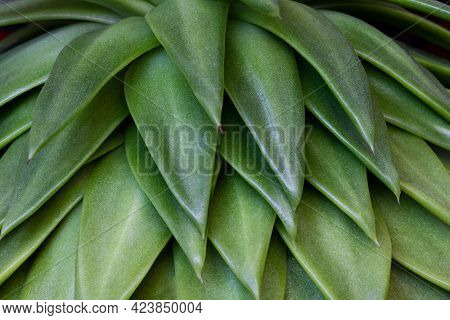 Detail Of Leaves Of Green