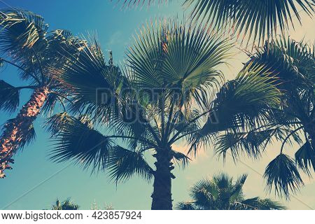 Beautiful View Of Palm Trees Outdoors On Sunny Summer Day. Stylized Color Toning