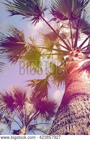 Beautiful Palm Tree Outdoors On Sunny Summer Day, Low Angle View. Stylized Color Toning