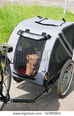 Car for dog transport by bike poster