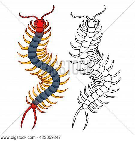 Decorative Scolopendra, Dangerous Poisonous Insect, Predator, Color Vector Illustration With Black I