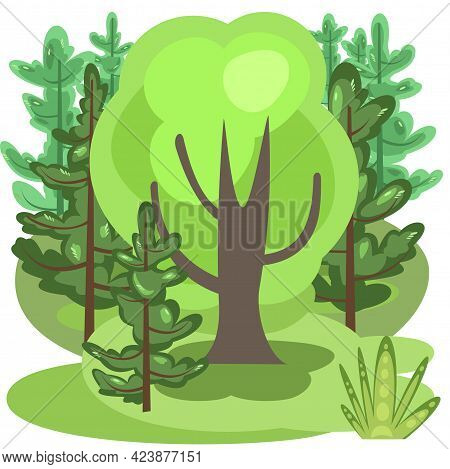 Flat Forest. Square Illustration In A Simple Symbolic Style. Funny Green Rural Landscape. Comic Desi