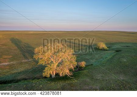 lonely trees along a seasonal creek in shortgrass prairie, Pawnee National Grassland in Colorado, aerial view