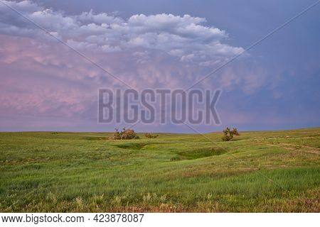dusk over green prairie with lonely trees along a seasonal creek - Pawnee National Grassland in Colorado, late spring or early summer scenery