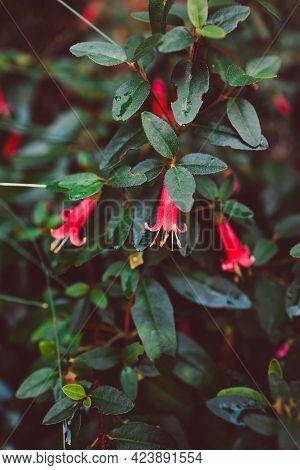 Native Australian Plant Outdoor In Sunny Backyard