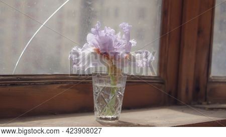 Iris In Glass. Iris Flower On Old Weathered Wooden Sill With Cracked Window On Background. Day Light