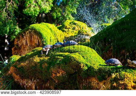 Turtles On Moss In Beautiful Weather Hdr