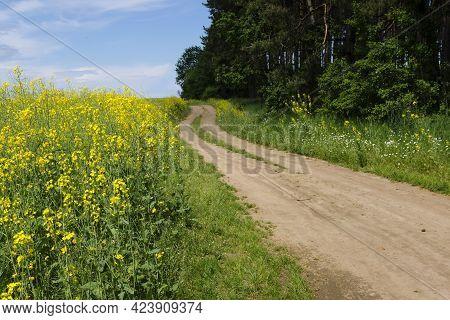A Winding Field Road. Blooming Rapeseed. Yellow Field Of Rapeseed Flowers.