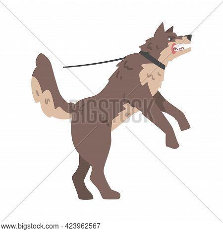 Aggressive Brown Dog On Leash Baring Its Teeth Vector Illustration