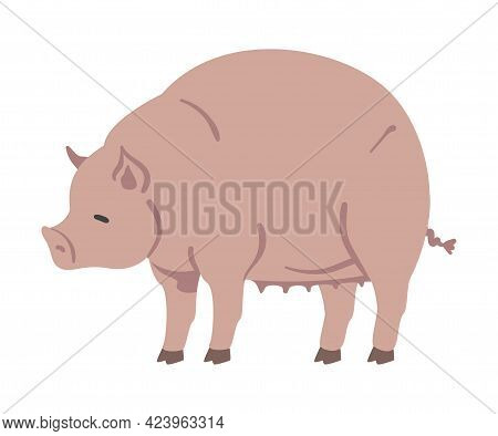Cute Pig Farm Animal, Livestock Cartoon Vector Illustration