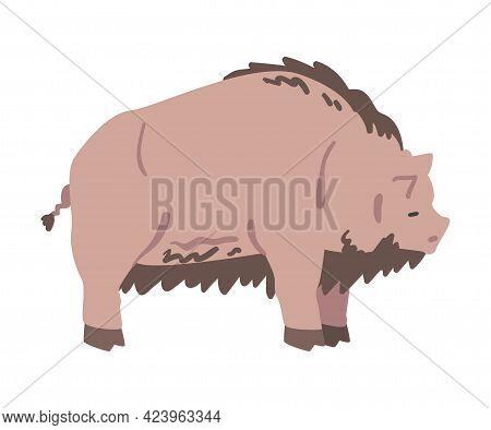 Dirty Pig Farm Animal, Livestock Cartoon Vector Illustration