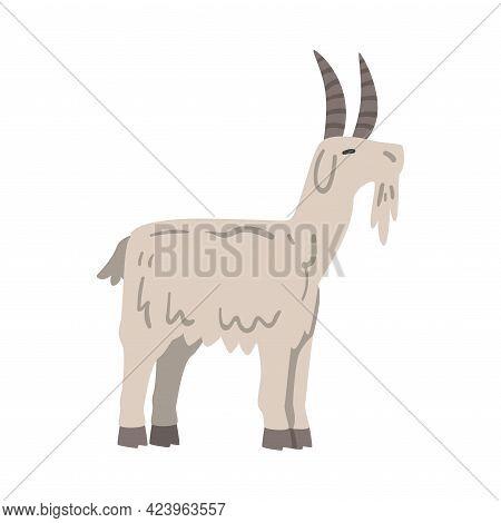 Side View Of Goat Farm Animal, Livestock Cartoon Vector Illustration