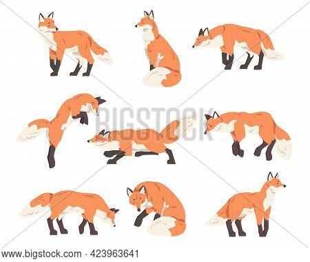 Red Fox Activity Set, Wild Predator Forest Mammal Animal Cartoon Vector Illustration