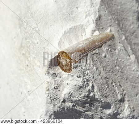 Remains Of The Ancient Fossil Belemnite Inside In A Piece Of Chalk Stone. Antiquity History And Exca