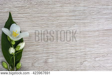 A Sprig Of Jasmine Flowers On A Wooden Background