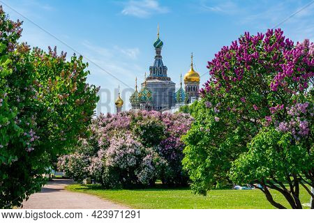 Blooming Lilacs On Field Of Mars With Church Of Savior On Spilled Blood At Background, Saint Petersb