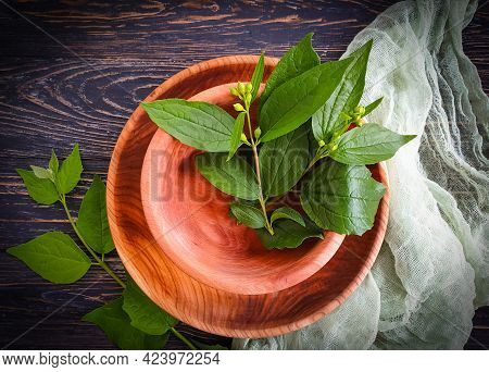 Wooden Plate, Green Branch On Wooden Background