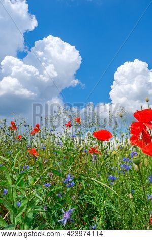 Poppies And Cornflowers And Other Wild Flowers On Meadow Against Blue Sky Background Closeup. Beauti