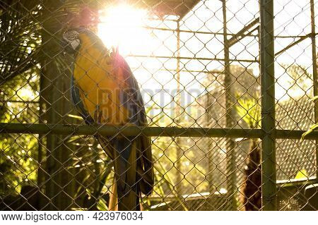 São Paulo Brazil. Out 08, 2009: Parrot Living In Captivity At The Zoo In The Interior Of São Paulo,