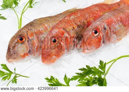 Macro Close Up Detail Of Fresh Red Mullets On Ice With Decorative Green Parsley Leaves.